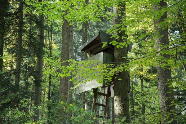 Kurs im Wald mit Bäumen sprechen