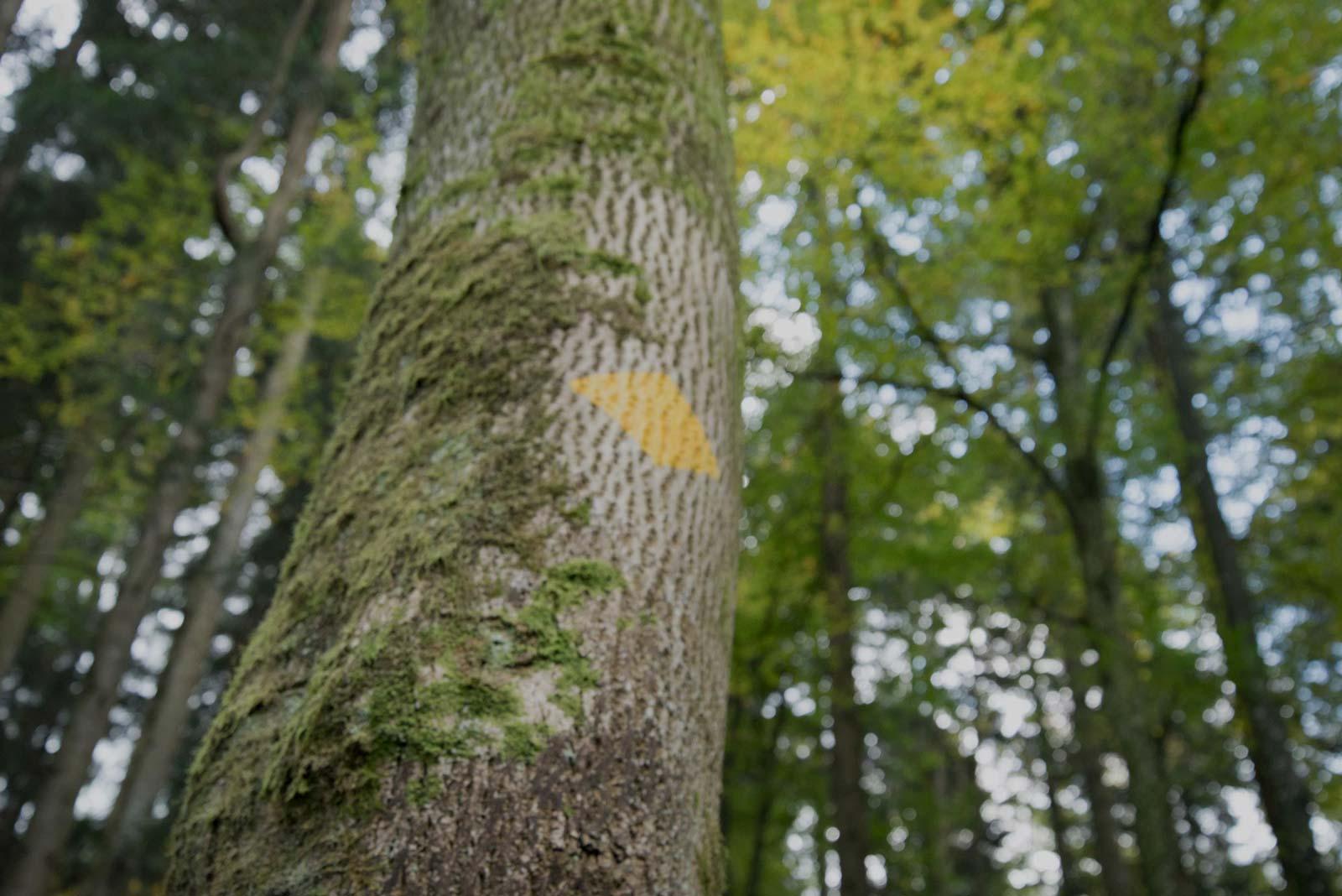 Lehrer vermitteln Wissen über Bäume